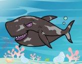 Desenho Tubarão dentuço pintado por ceciliaz