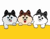 Desenho 3 filhotes de cachorro pintado por teia72