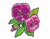 Desenho Flores de amor-perfeito pintado por m28castro