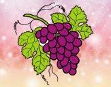 Desenho Cacho de uvas pintado por m28castro