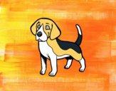 Cão Beagle