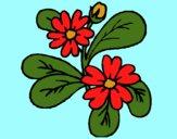 Flores 4a
