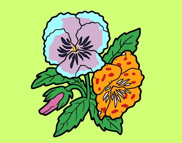 Desenho Flores de amor-perfeito pintado por Bianca99