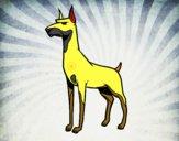 Cão Dobermann