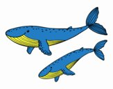 Desenho Baleias pintado por gabi_br
