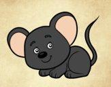 Um ratinho