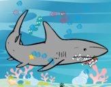 Um tubarão nadando
