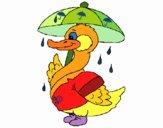 Pato sob a chuva
