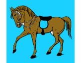 Cavalo de competição