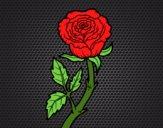 Desenho Rosa selvagem pintado por perfekt