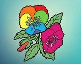 Flores de amor-perfeito