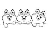 Dibujo de 3 filhotes de cachorro