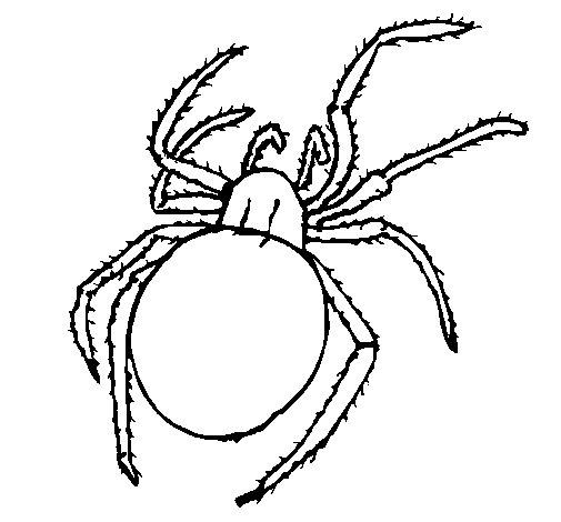 Desenho de Aranha venenosa para Colorir