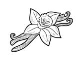 Desenho de Baunilha para colorear