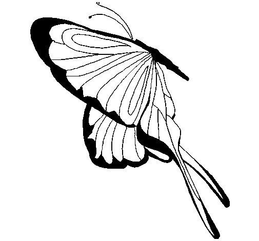 Desenho de Borboleta com grandes asas para Colorir