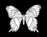 Desenho de Borboleta silvestre para colorear