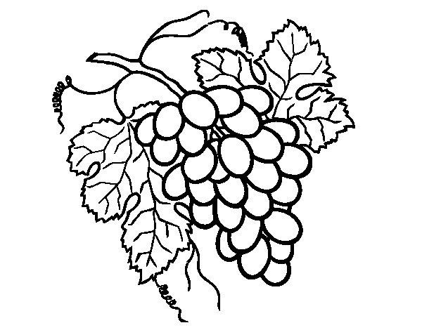 Desenho de Cacho de uvas para Colorir