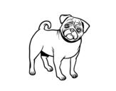 Desenho de Cão Pug para colorear