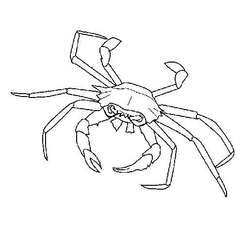 Desenho de Caranguejo de mar para Colorir