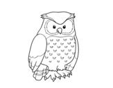 Dibujo de Coruja adulta
