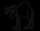 Desenho de Dromedário para colorear