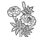 Desenho de Flor da maravilha para colorear