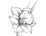 Desenho de Flor de narciso para colorear