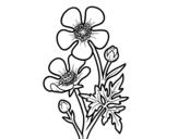 Desenho de Flor ranunculus acris para colorear