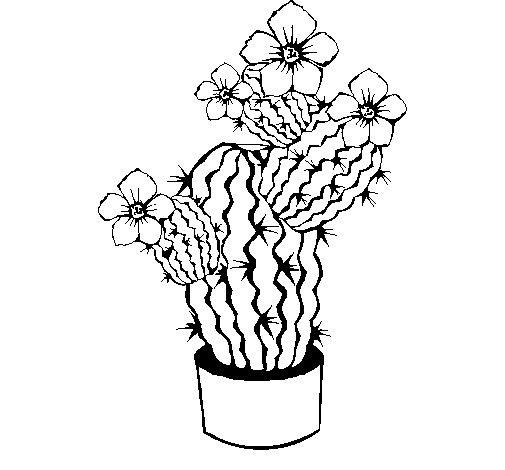 Desenho de flores de cacto para colorir - Cactus coloriage ...