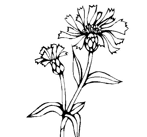 Desenho de Flores de campo para Colorir