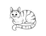 Desenho de Gato novo para colorear