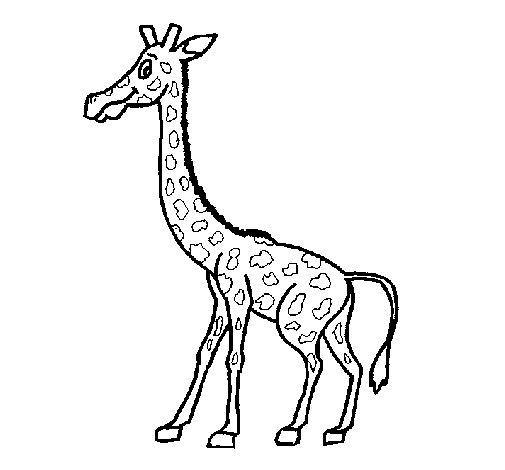 Desenho de girafa 1 para colorir - Dessin girafe simple ...