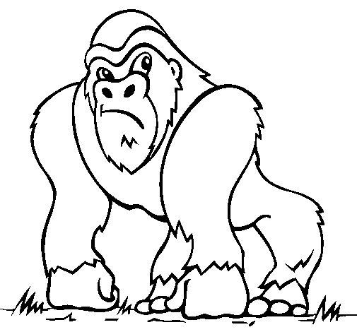 Desenho de Gorila para Colorir