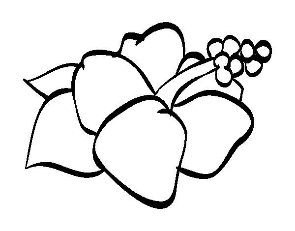 Desenho de Lagunaria flor para Colorir