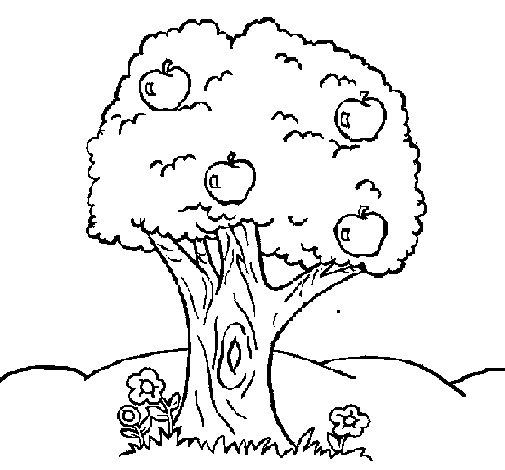 Desenho de Macieira  para Colorir