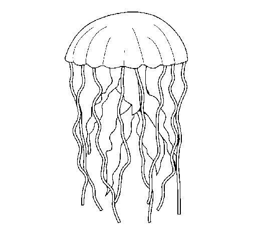 Desenho de Medusa para Colorir