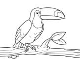 Desenho de O tucano para colorear