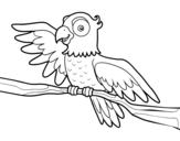 Desenho de Papagaio en liberdade para colorear