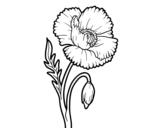 Desenho de Papoila selvagem para colorear