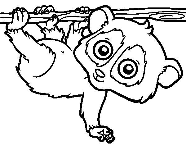 Desenho de Pigmeu loris lento para Colorir