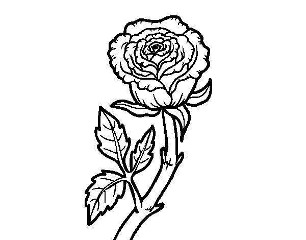 Desenho de Rosa selvagem para Colorir