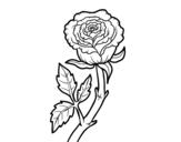 Dibujo de Rosa selvagem