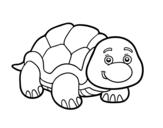 Dibujo de Tartaruga de terra