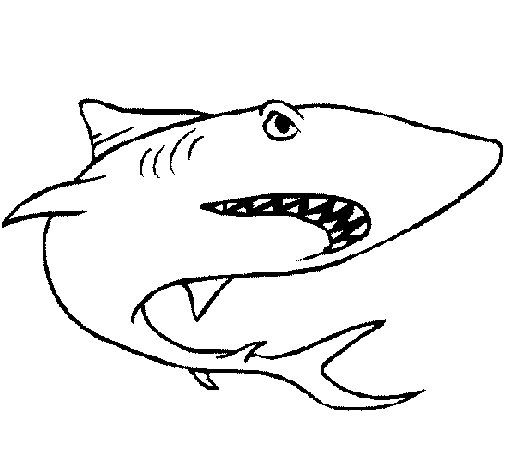 Desenho de Tubarão para Colorir