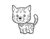 Desenho de Um gato doméstico para colorear