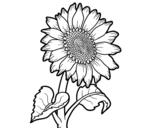 Dibujo de Um girassol