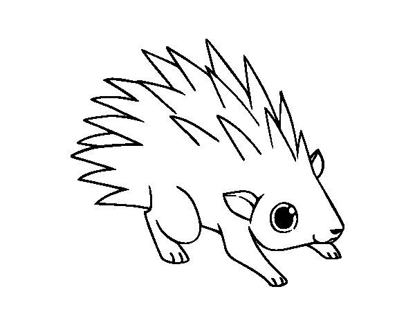 Desenho De Um Ourico Para Colorir