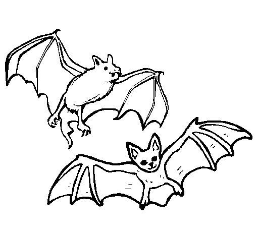 Desenho de Um par de morcegos para Colorir