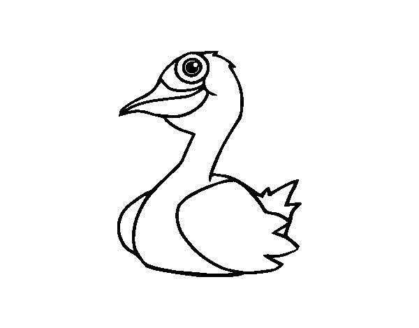 Desenho De Um Pato Para Colorir