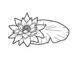 Desenho de Uma flor de lotus para colorear